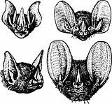 Bat's heads