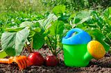 Garden radish and watering can