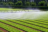 Irrigation water mist