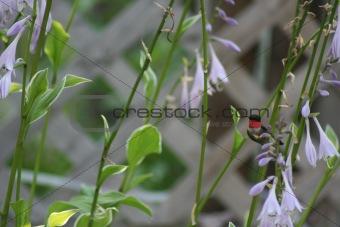 Flight of the humming Bird