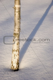 Small birch trunk.