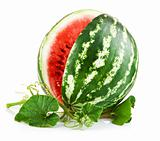 juicy watermelon in cut with green leaf