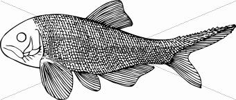 Fish amblipterus