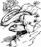 Lizard procolophonia