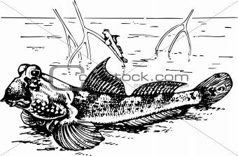 Fish periophthalmidae