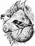 Birds remizinae