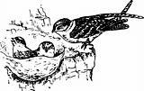 Bird collocalia