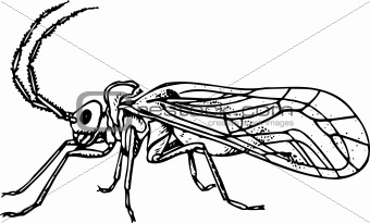 Bug copeognatha