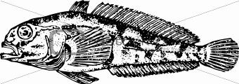 Fish trematomus