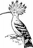 Bird upupidae