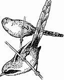 Bird panurus biarmicus