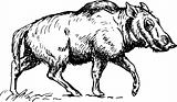 Hell Pigs (Entelodont)