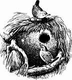 Wren (troglodytes)