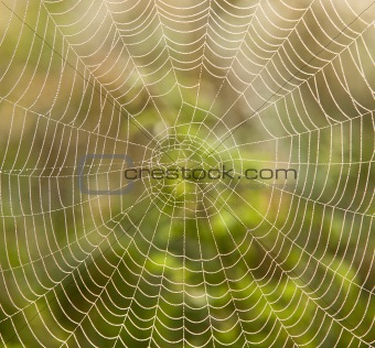 closeup of spider web with dew drops in the morning