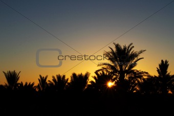 Beautiful sunrise in the desert