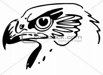 Hawk's head