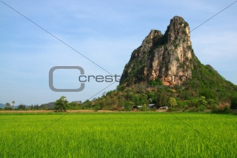 Green field available in Thailand