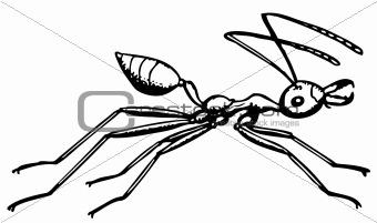 Ant Oecophylla