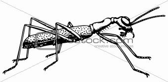 Ant Collyris