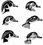 Duck's heads