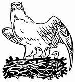 Bird with nestlig