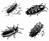 Beetles Buprestidae