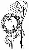 Sunflower under lamp