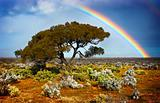 Rainbow Tree