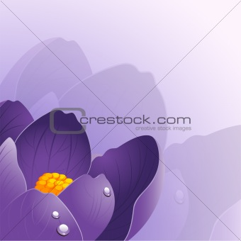 Background with crocus flower