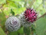spiny plant