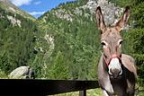Donkey close up
