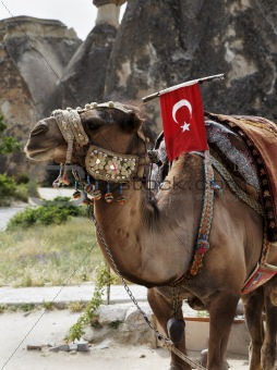 single hump camel with Turkish flag