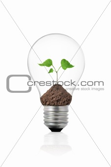 eco concept: light bulb with green plant inside