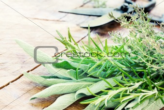 Freshly harvested herbs