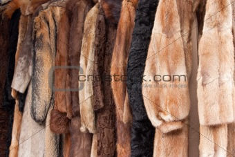 Animal fur coats