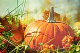 Pumpkin in the grass with vintage color feeling