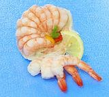 starter of fresh shrimp
