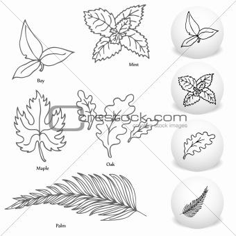 Image Description: An image of a set of bay, maple, mint, oak and palm leaf
