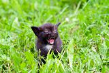 temper - small kitten in the grass