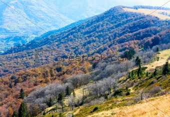 Autumn mountains  and stark bare trees