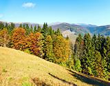 autumn mountain forest