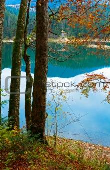 Autumn tree and Synevir lake
