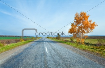 Autumn road and yellow birch