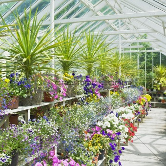greenhouse, Birr Castle Gardens, County Offaly, Ireland