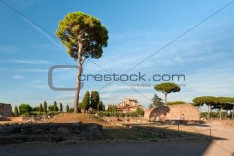 Tree at the Palatine Hill