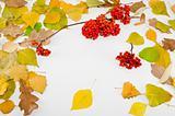 Framework from autumn leaves