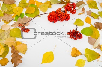 Framework from autumn leaves