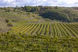 vineyards, Eko Hnizdo, Czech Republic