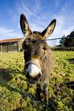 donkey, Champagne, France