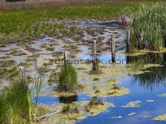 Brackish Swamp